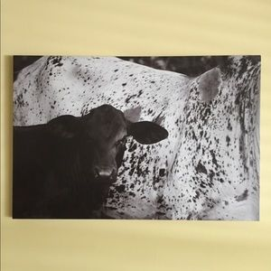 Cow Calf Canvas Print